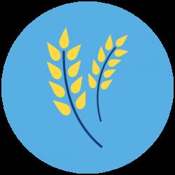 Wheat-17